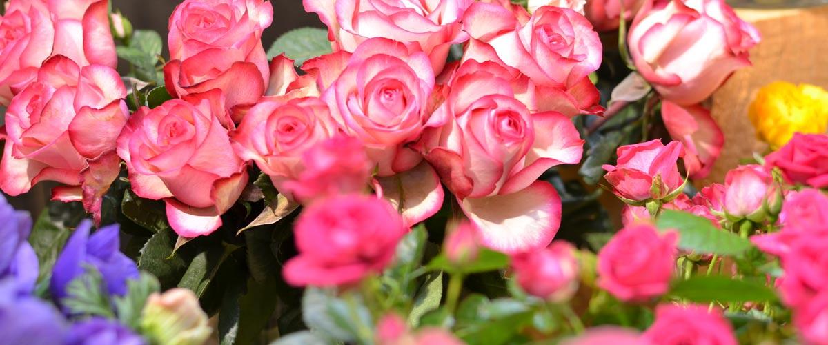 Bahnhof Apotheke Purnatur Blumen Wir Lieben Blumen Das Sieht Man